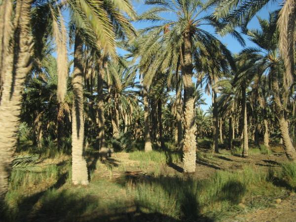 Тунис. Сахара. Оазис