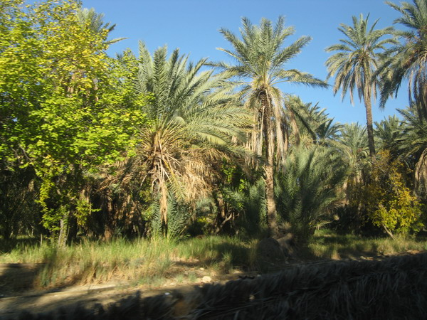 Тунис. Сахара. Шебика