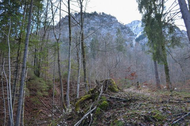 Лес ниже замка