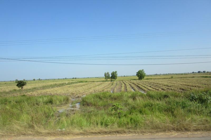Камбоджа, рисовые поля