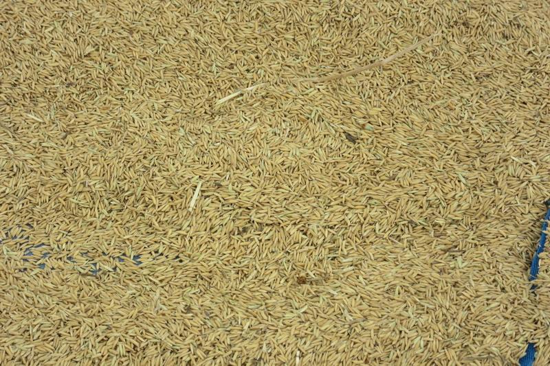необдирной рис