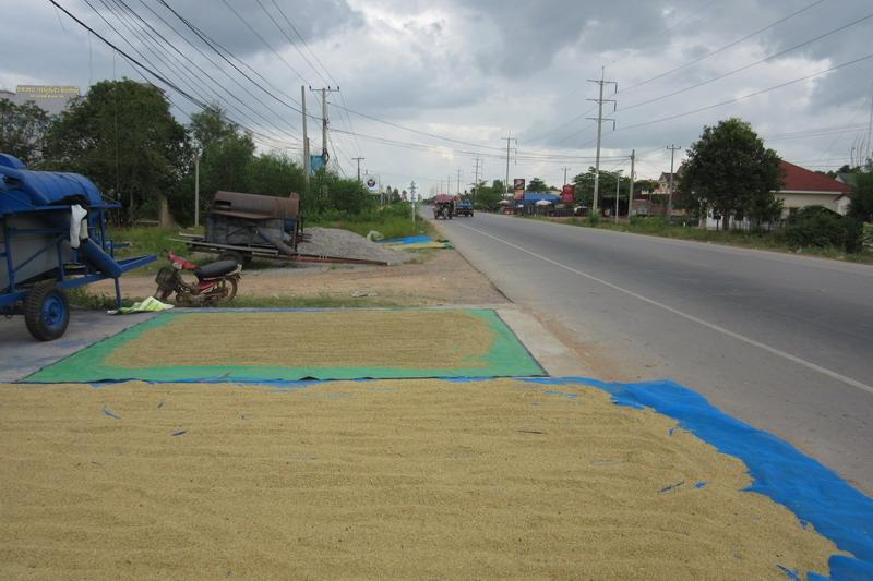 Камбоджа, сушка риса