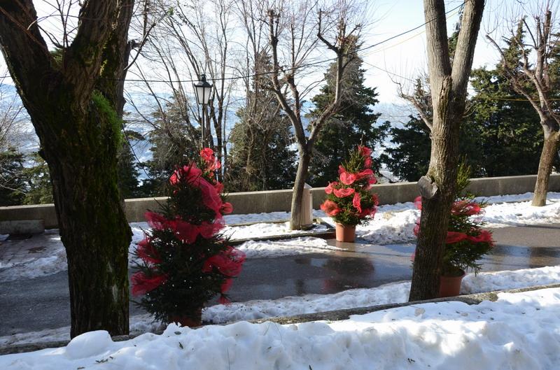 зимний Сан-Марино, елки