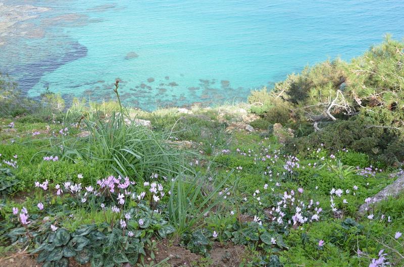Акамас, тропа Афродиты