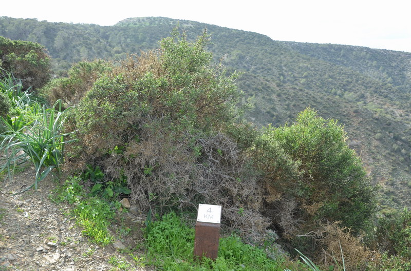 Полуостров Акамас тропа