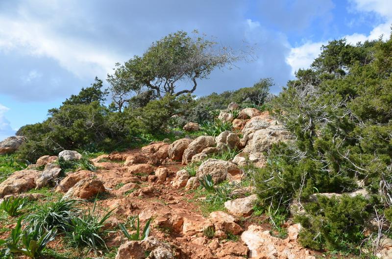Полуостров Акамас