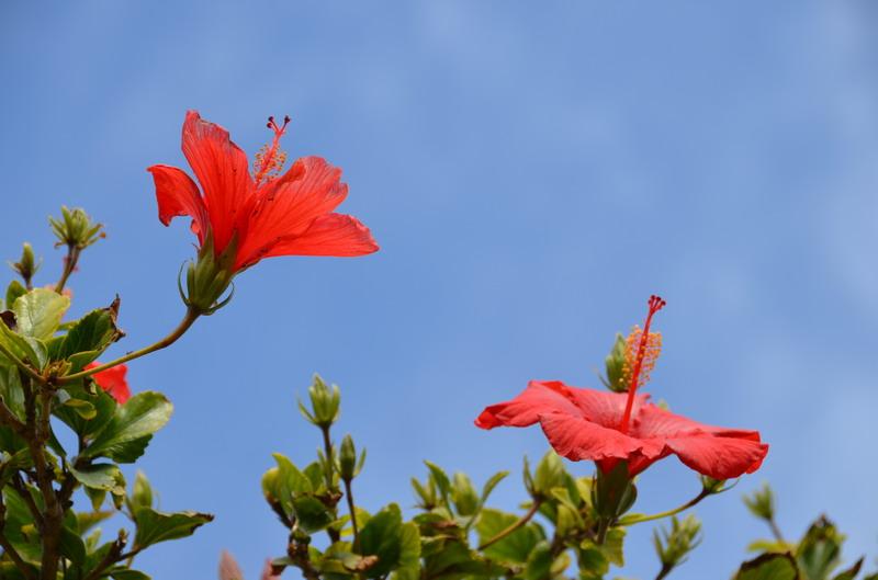 Кипр цветы