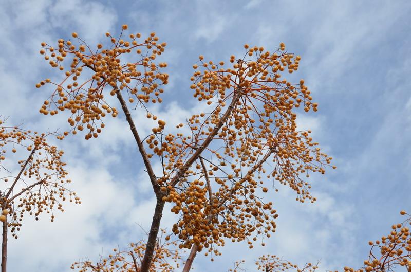 Кипр растения