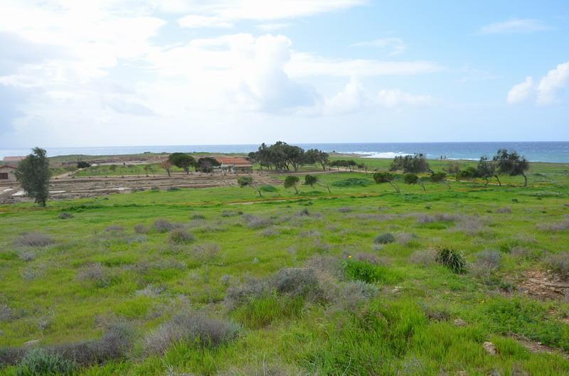 Пафос археологическая зона