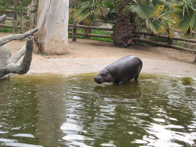 зоопарк Оутшорна, ЮАР