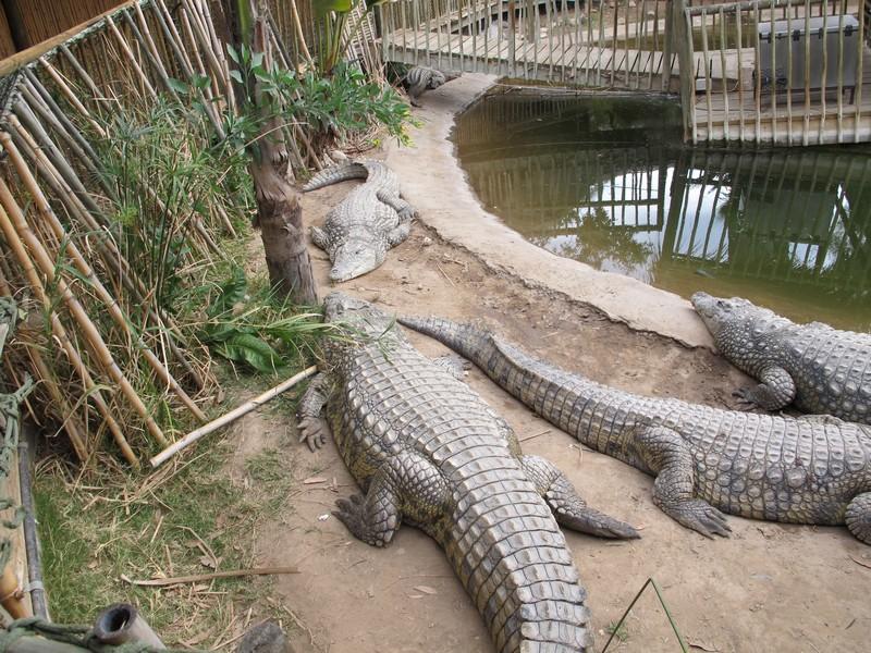 зоопарк Оутшорга, ЮАР
