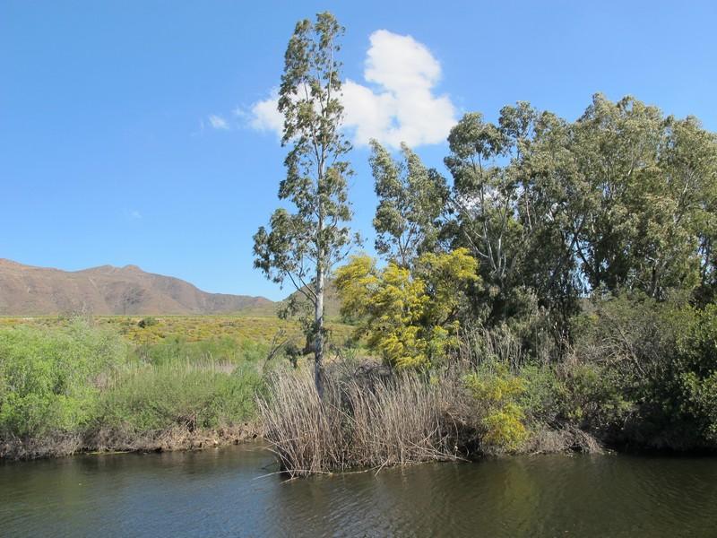 винная ферма в ЮАР