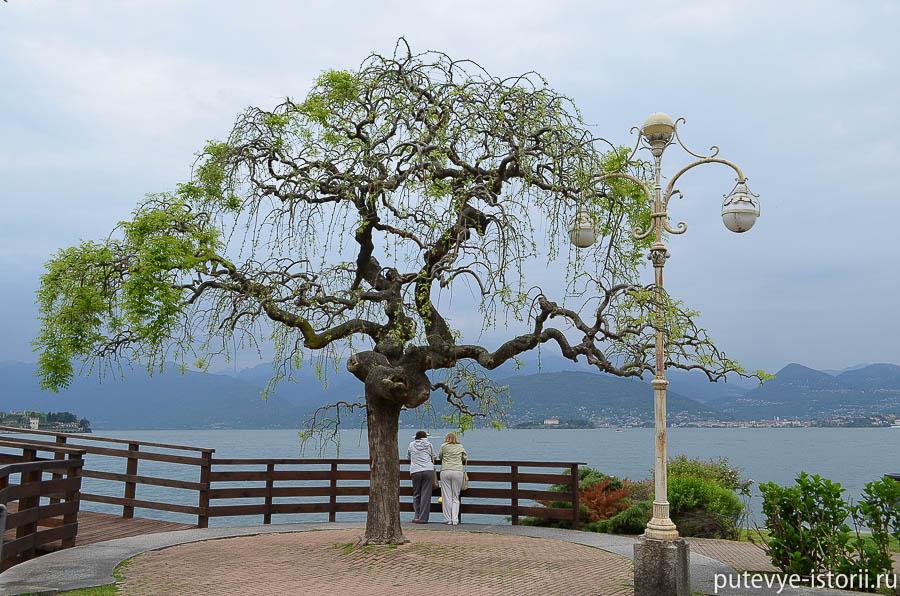 Дерево на набережной