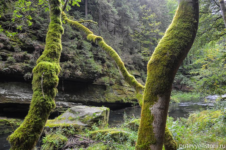 Тропа вдоль реки Каменицы