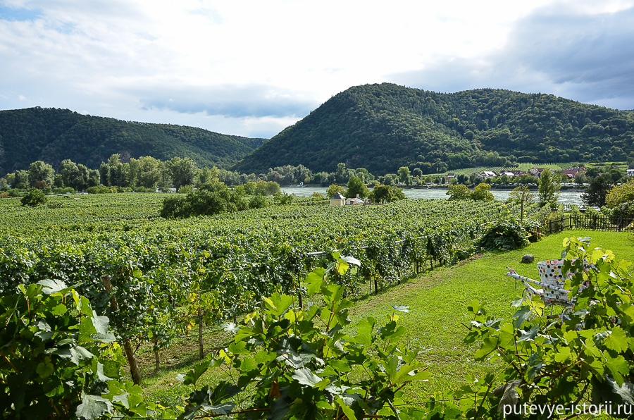Дюрнштайн виноградники