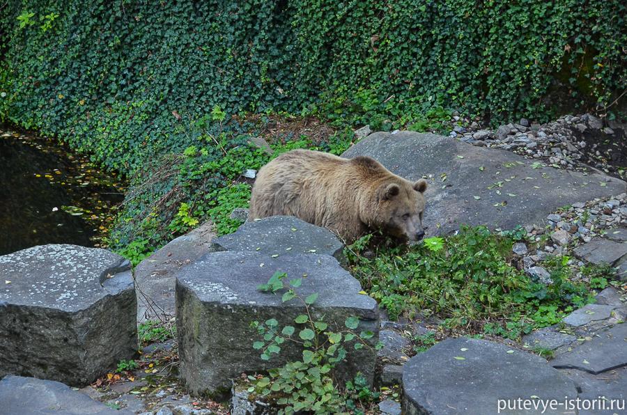 Медведи во рву