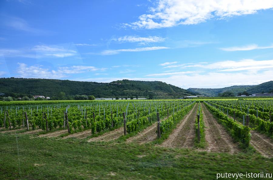 Виноградники Словении