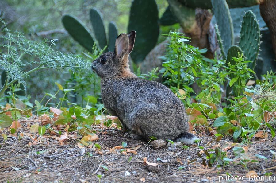 капри кролик
