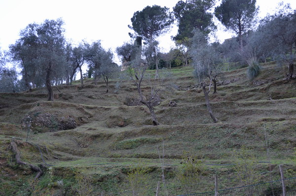 Террасы на склонах Портофино