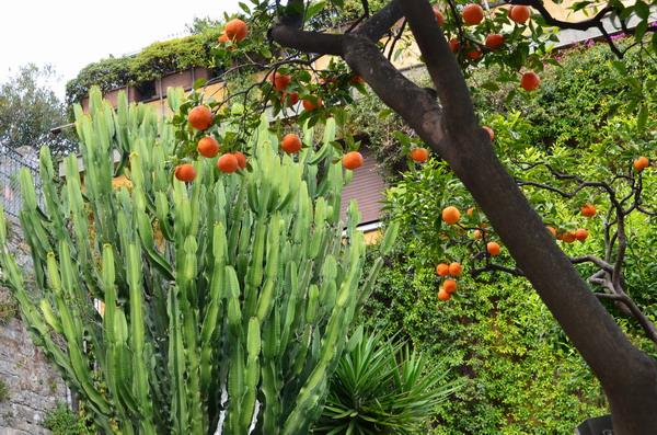 Парк в Санта-Маргерита