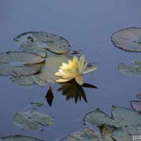 Сад Клода Моне в Живерни. Живые картины великого импрессиониста