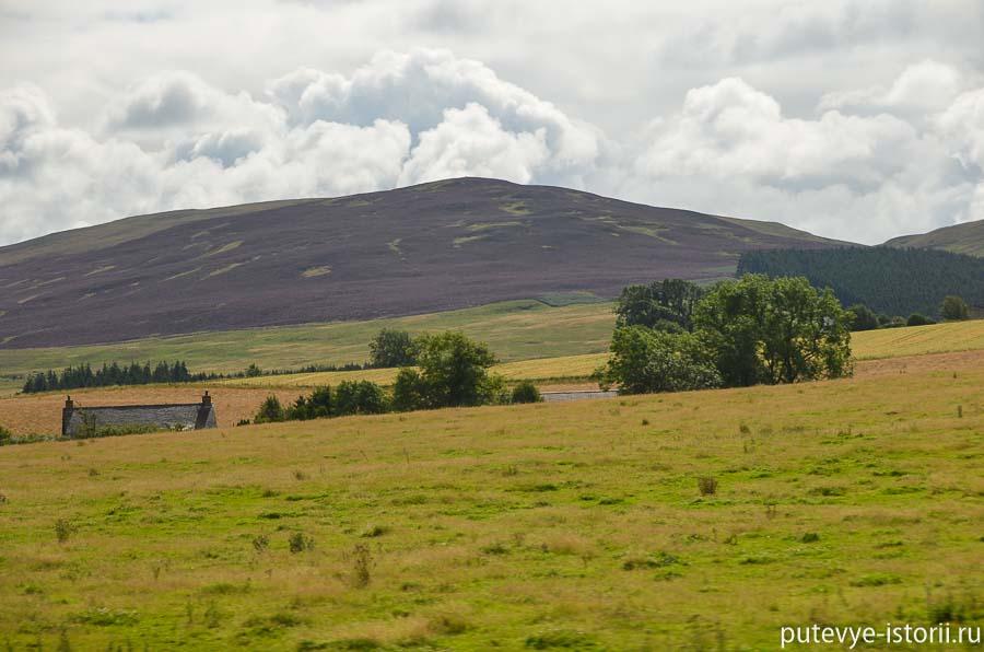 вереск в Шотландии