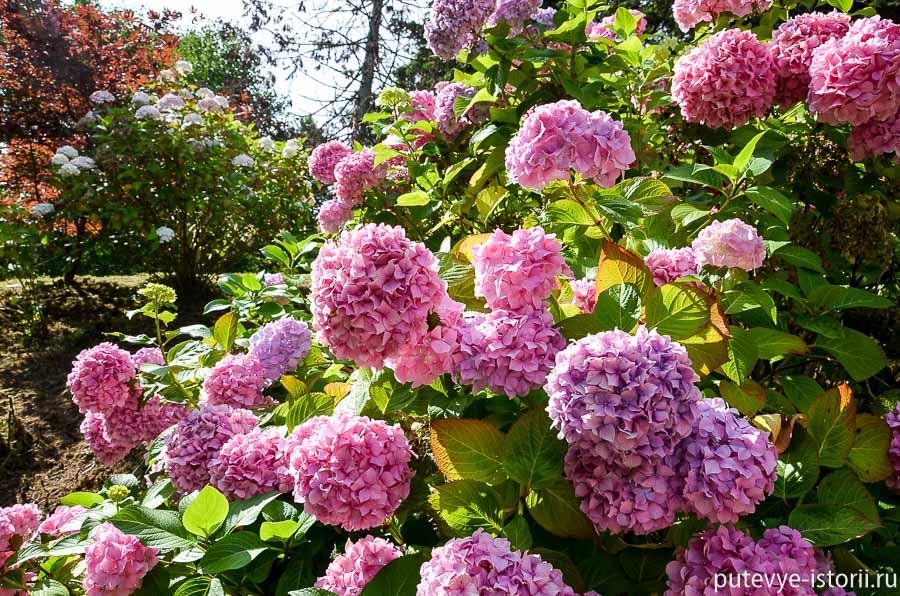 сады пауэрскорт