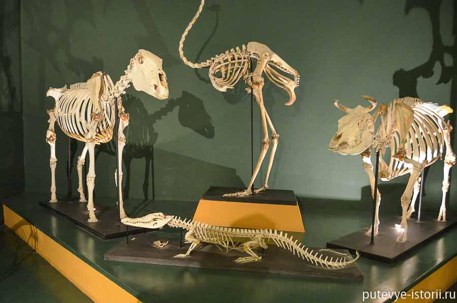 мдина музей естествознания