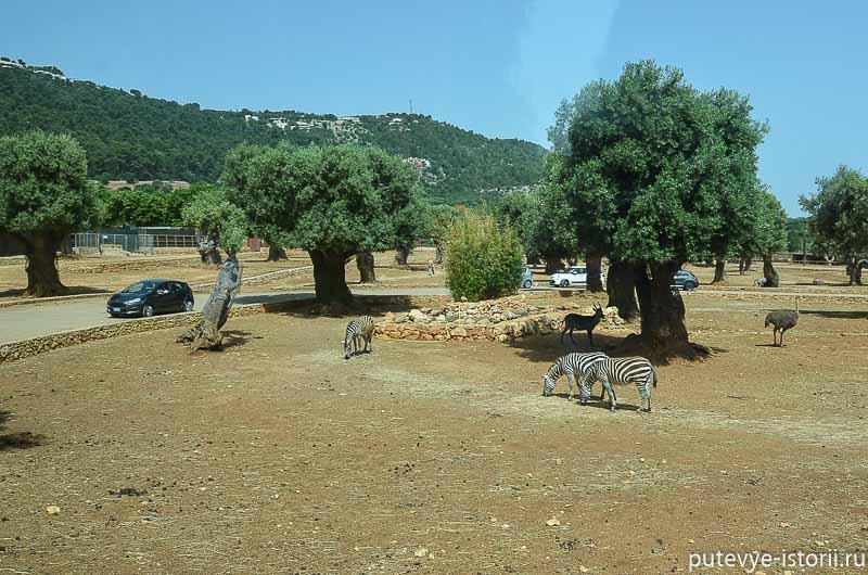 зоопарк сафари фазано апулия