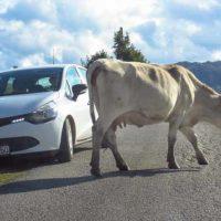 Путешествие по Черногории на машине