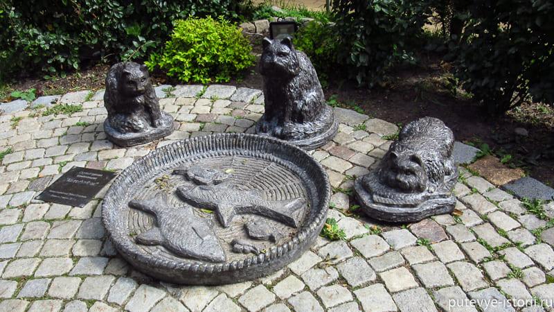 зеленоградск коты