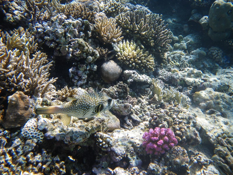 хургада риф